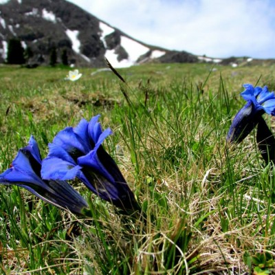 bluetenwanderung (8)